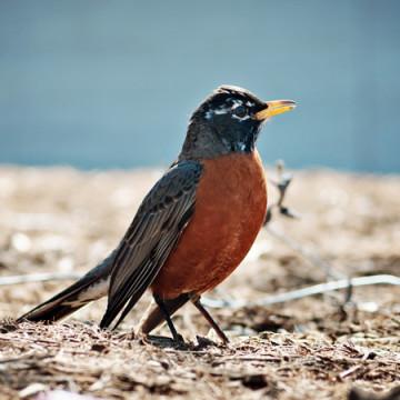 Birds: Part 2
